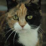 Bobby Ready For Adoption Cat Adoption Adoption Pet Adoption