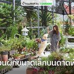 แบบสวน Tropical Modern English สวนหน าบ าน บ านและสวน ในป 2021 สถาปน ก แบบสวน