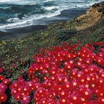 Sonoma County Tourism Sonomacounty On Pinterest