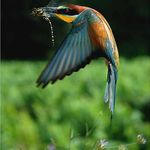 Pin By عبدالرحيم البلوشي On Birds World عالم الطيور Animals Masterpiece Bird