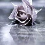 ddd66ea4a1fb Grisel s (Grisel1105) on Pinterest