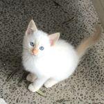 I Think My Cat Is Broken Pets Cats Kittens Cutest