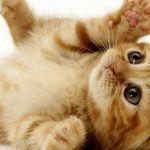 كيف تعتني بالقطط الصغيرة In 2020 Newborn Kittens Cat Having Kittens Kittens