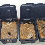 Rabbitry Management Software Reviews Show Rabbits Free Rabbits Rabbit Information