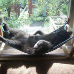 猫ちゃんの脱走 転落防止対策 玄関 ベランダ編 猫 扉 猫ドア