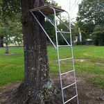 36+ Warren and sweat tree climber inspirations
