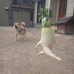 cd7979c4c8 Yukari Farkas (yukaprema) on Pinterest