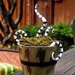 Conophytum calcul exotique Cactus RARES PIERRES VIVANTES mesemb Cactus Graines 15 graines