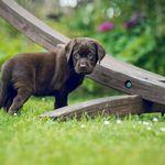 Angebot Fur Zuchter Hundefotografie Hundewelpen Hunde Welpen