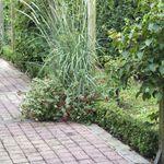 Creer Une Allee De Paves Au Jardin En 2020 Allee Pavee Et Jardins