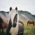 Harry/'s Horse Hufglocken Tiny Néoprène Spring Cloches fermeture velcro 4 couleurs