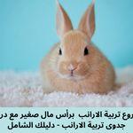 مشروع تربية الارانب برأس مال صغير مع دراسة جدوى تربية الارانب دليلك الشامل Animals