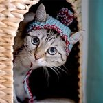 Pin By Catmale On Cat Fashion Cute Cats Photos Funny Cat Images Cute Cat Wallpaper