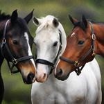 Image Uploaded By Fred Find Images And Videos About Horse On We Heart It The App To Get Lost In What You Love Horses Pretty Horses Beautiful Horse Pictures