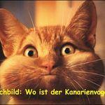 Pin Von Rene Zepernick Auf Lustige Fotos Witzige Spruche Lustig