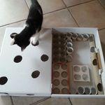 Bkh Kitten Britisch Kurzhaar Seal Tabby Point Mit Stammbaum In Nordrhein Westfalen Freudenberg Britisc Britisch Kurzhaar Bkh Kitten Katze Britisch Kurzhaar