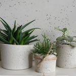 Kwietnik Drewniana Doniczka Pakamera Pl Herb Planters Wooden Garden Planters Flower Pots
