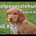 Australian Shepard Husky Mix Welpe In Bayern Schollnach Mischlinge Und Mischlingswelpen Kaufen Ebay Kleinanzeigen Hund Kreuzungen Hunderassen Tiere