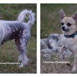 Lost Dog Anatolian Shepherd Dog In Milton Fl Lostmydoggie Com Anatolian Shepherd Dog Losing A Dog Dogs