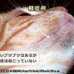ロイヤルカナン 食事療法食 猫用 腎臓サポート ドライ 500g ペットゴー カナン 猫の健康 ロイヤル