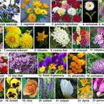 Kwiaty Jadalne Wszystko O Kwiatach Blue Angel Chomikuj Pl Paper Flowers Crepe Paper Crafts Red Carnation