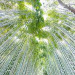aa66b92d4e22d Nanako itaya  ) awano(dl0u0lb0819)さん|Pinterest