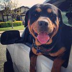 Brunggberghunde Geburt Von 6 Schilthunden 4 Ruden 2 Hundinnen