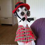 Italian Greyhound Apparel Handmade Knitwear 5color Italiaanse Windhond Italiaans Hond Kleding