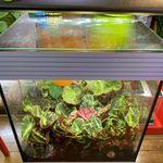 Epingle Sur Aquarium Et Terrarium