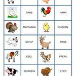 Natur Bauernhof Haustiere Nutztiere Tiere Pertoft Tiere