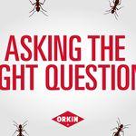 Orkin Pest Control (orkin) on Pinterest