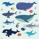Apon Nantas Live Tropical Aquarium Fish Tank Driftwood