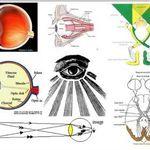 3d Male Nervous System Model Fibromialgia Anatomia Anatomia Humana