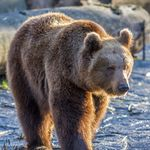 Smokey The Bear Smokey The Bears Bear Pictures Bear