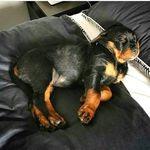Alyssa And Kaia Best Friends Rottweiler Best Friends Animals