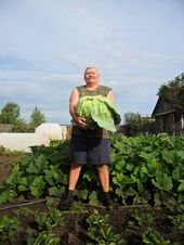 Photo of How do I get cabbage without growing home …