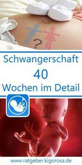 Wochenansicht – 40 Schwangerschaftswochen im Detail – Woche für Woche erhältst…  – Schwangerschaft
