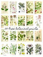 20 Free Botanical Prints and Easy DIY Wall Hanging