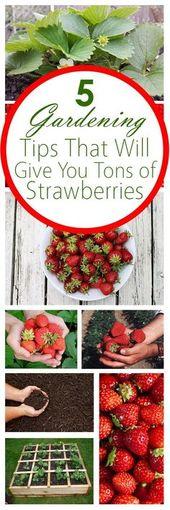 Easily Grow Strawberries with 5 Gardening Tips – backyard