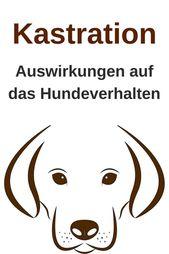 Efecto de la castración en el comportamiento del perro.   – Hunde