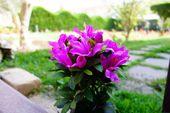 Blumenstrauß #Kunstblumen #Schöne Blumen #Blumenstrauß #Blumengarten #Garten …  #Blumen #Bl… – Blumenstrauß