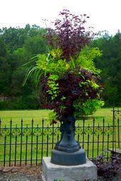Purple plant is a Japanese maple, spikes are dracaena, purple trailing foliage l…
