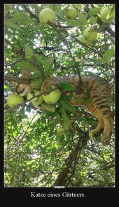 Katze eines Gärtners … | Lustige Bilder, Sprüche, Witze, echt witzig   – kuriose Bilder