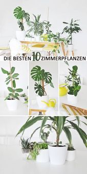 The best house plants for the apartment