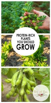 Protein-Rich Plants You Should Grow