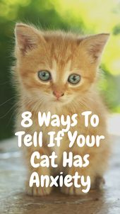 8 Signs Your Cat Has Anxiety – Cats and Kittens