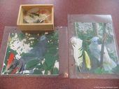 NAMC montessori preschool classroom studying birds feathers pictures