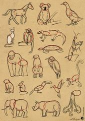 Tutorial Easy Way To Draw Animals By Unicatstudio Deviantart Com