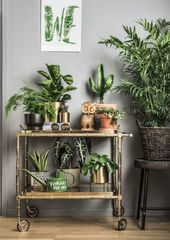 Shelves for indoor plants # Plants # Flora #