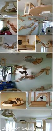 Maybe Perfect for Small Houses ?: Cat Furniture, Crazy Awesome House, Awesome Ca … #awesome #crazy #diyforpets #furniture #hauser